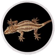 Top View Of Gargoyle Gecko, Rhacodactylus Auriculatus Staring Isolated On Black Background. Native T Round Beach Towel by Sergey Taran