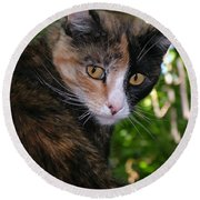 Tortie Round Beach Towel