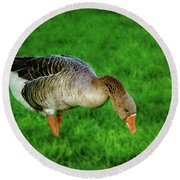 Toulouse Goose  Round Beach Towel
