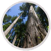 Towering Redwoods Round Beach Towel