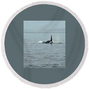 Transient Killer Whale Round Beach Towel