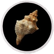 Trapezium Horse Conch Shell Round Beach Towel