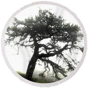 Round Beach Towel featuring the photograph Tree by Alex Grichenko