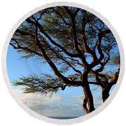 Tree At Lapakahi State Historical Park Round Beach Towel