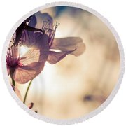 Tree Blossoms Backlit By The Afternoon Sun Round Beach Towel
