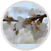 Dogwood Branch Pink Round Beach Towel