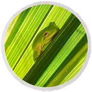 Tree Frog And Palm Frond Round Beach Towel