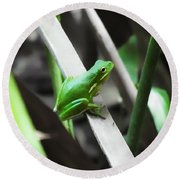 Tree Frog Round Beach Towel