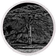 Tree In England Round Beach Towel