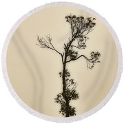 Tree In The Mist Round Beach Towel