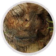 Round Beach Towel featuring the photograph Tree Memories # 22 by Ed Hall