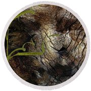 Round Beach Towel featuring the photograph Tree Memories # 37 by Ed Hall