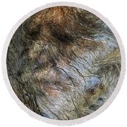 Round Beach Towel featuring the photograph Tree Memories # 41 by Ed Hall