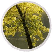 Round Beach Towel featuring the photograph Tree Of Light by Shane Holsclaw