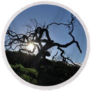 Round Beach Towel featuring the photograph Tree Of Light - Sunshine Through Branches by Matt Harang