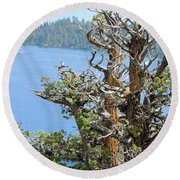 Round Beach Towel featuring the photograph Tree Over Emerald Cove by Lynda Lehmann