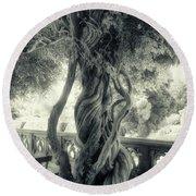 Tree Trunk Bw Series Y6693 Round Beach Towel