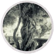 Tree Trunk Bw Series Y6693 Round Beach Towel