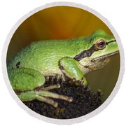 Treefrog On Rudbeckia Round Beach Towel