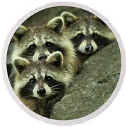 Tres Banditos Round Beach Towel by Mircea Costina Photography