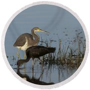 Tri-colored Heron And Glossy Ibis Round Beach Towel