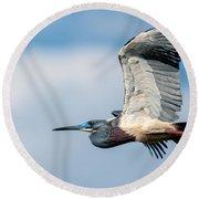 Tri-colored Heron In Flight Round Beach Towel