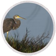 Tri-colored Heron In The Morning Light Round Beach Towel