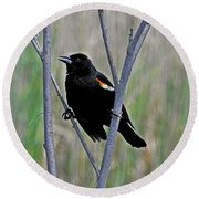 Tricolored Blackbird Round Beach Towel