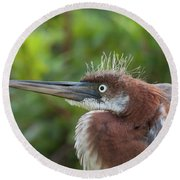 Tricolored Heron - Bad Hair Day Round Beach Towel
