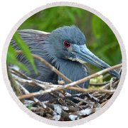 Nesting Tricolored Heron Round Beach Towel