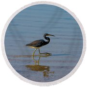 Tricolored Heron Taking A Stroll Round Beach Towel
