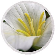 Trillium Grandiflorum Round Beach Towel by Angie Rea