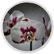 Round Beach Towel featuring the photograph Triplets by Karen Stahlros