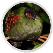 Tropical Bird Round Beach Towel