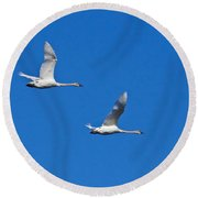 Round Beach Towel featuring the photograph Trumpeter Swan 1727 by Michael Peychich