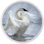 Trumpeter Swan - Misty Display 2 Round Beach Towel
