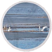Round Beach Towel featuring the photograph Trumpeter Swans 0933 by Michael Peychich