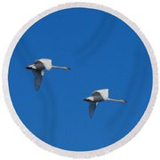 Round Beach Towel featuring the photograph Trumpeter Swans 1725 by Michael Peychich