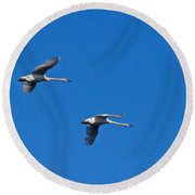 Round Beach Towel featuring the photograph Trumpeter Swans 1726 by Michael Peychich