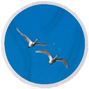 Round Beach Towel featuring the photograph Trumpeter Swans 1735 by Michael Peychich