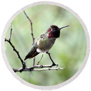 Trumpeting Hummingbird Round Beach Towel