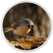 Tufted Titmouse In Fall Round Beach Towel