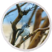 Tufted Titmouse In Tree Round Beach Towel