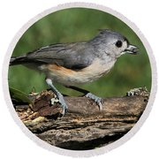Tufted Titmouse On Tree Branch Round Beach Towel