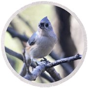 Round Beach Towel featuring the photograph Tufted Titmouse by Trina Ansel