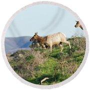 Tules Elks At Tomales Bay Point Reyes National Seashore California 5dimg9315 Round Beach Towel