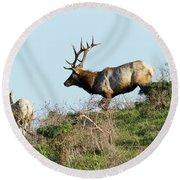 Tules Elks At Tomales Bay Point Reyes National Seashore California 5dimg9327 Round Beach Towel