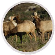 Tules Elks At Tomales Bay Point Reyes National Seashore California 5dimg9338 Round Beach Towel