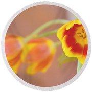 Tulip Beauty Round Beach Towel by Deborah  Crew-Johnson