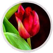 Tulip Caught In The Light Round Beach Towel